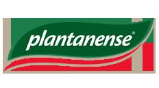 Plantanense
