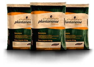 Sementes Plantanense